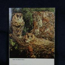 Postales: BLOC 11 FOTO POSTALES AVES DE ESPAÑA MUSEO NACIONAL DE CIENCIAS NATURALES MADRID AÑOS 70 15X10CMS. Lote 48916741