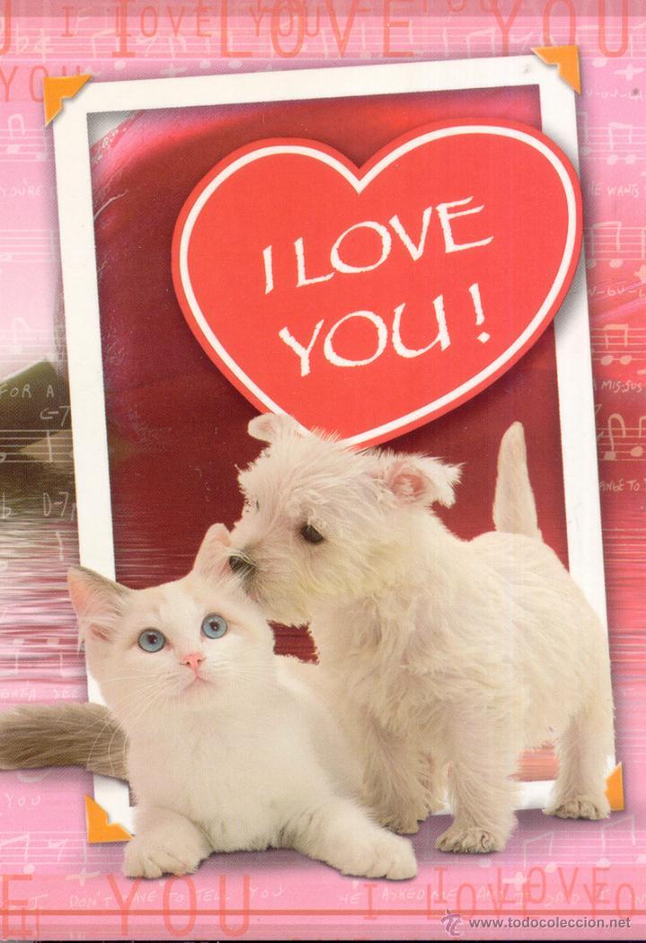 Amor Entre Perros Y Gatos Postal No Circulada Sold Through Direct