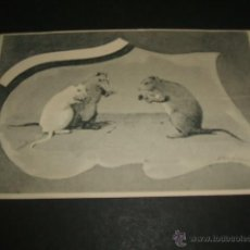 Postales: RATAS POSTAL ANTERIOR A 1905. Lote 49678108