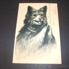 Postales: PERRO POSTAL EN RELIEVE ANTERIOR A 1905. Lote 49701557