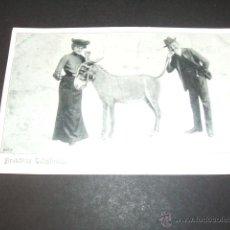 Postales: BURRO POSTAL ANTERIOR A 1905. Lote 49701566