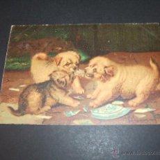 Postales: PERROS POSTAL ANTERIOR A 1905. Lote 49701570