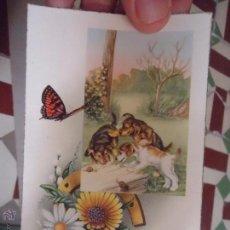 Postales: MAGNIFICA TARJETA POSTAL SECCION ANIMALES O FLORES - PERRO. Lote 49703824