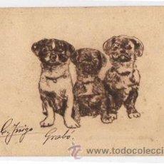 Postales: TARJETA POSTAL CON GRABADO DE PERROS. CIRCA 1905. RECARTE HIJO, MADRID. Lote 49927153