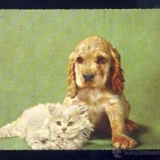 Postales: POSTAL DE ANIMALES: PERRO Y GATO. Lote 50748236