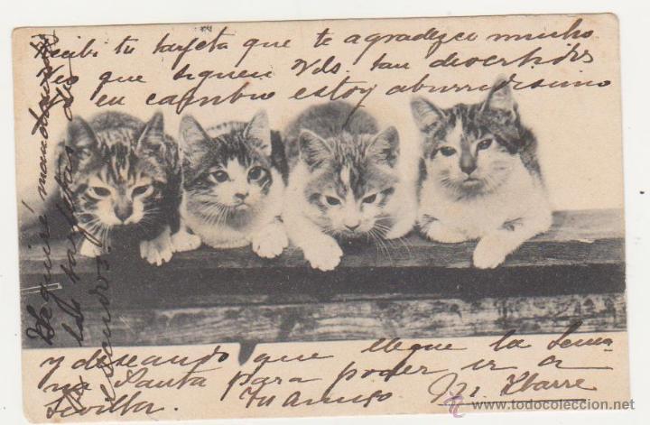 POSTAL. FRANQUEADO Y FECHADO EN 1903. (Postales - Postales Temáticas - Animales)