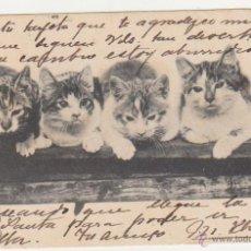 Postales: POSTAL. FRANQUEADO Y FECHADO EN 1903.. Lote 50975019