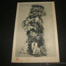 Postales: PERRO CON GAFAS Y GORRA POSTAL ANTERIOR A 1906. Lote 51147339