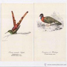 Postales: 4 POSTALES ANIMALES: TUCAN, HOCCO ROUX, TRAGOPAN DE HASTINGS, OISEAU MOUCHE SAPHO. Lote 51196674