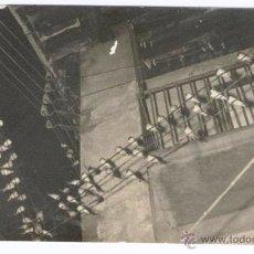 Postales: GOLONDRINAS SOBRE LOS CABLES DE LA LUZ. Lote 51659195