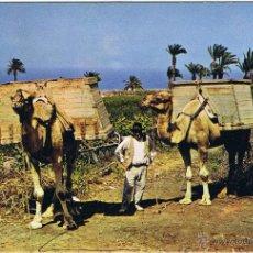 Postales: CAMELLOS - ISLAS CANARIAS - CIRCULADA. Lote 51665039