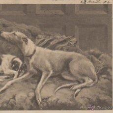 Postales: PERROS, CIRCULADA EN 1904 DE RALLADO CONTINUO (VER DORSO) . Lote 51672628
