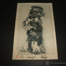 Postales: PERRO CON GAFAS Y GORRA POSTAL ANTERIOR A 1906. Lote 51695787