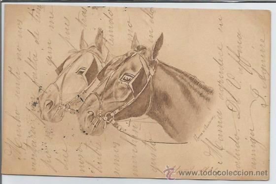 POSTAL CABEZAS DE CABALLOS 1904 (Postales - Postales Temáticas - Animales)
