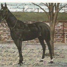 Postales: POSTAL CABALLO 1905. Lote 51966624
