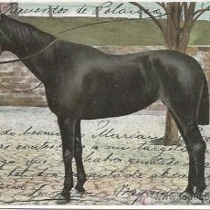 Postales: POSTAL CABALLO 1905. Lote 51966638