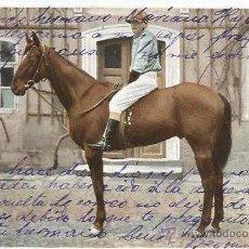 Postales: POSTAL CABALLO 1905 FECHADA EN BAYONA. Lote 51966671