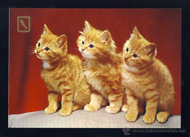 POSTAL DE ANIMALES: 3 GATITOS. GATO (ED.FISA 3065/4) (Postales - Postales Temáticas - Animales)