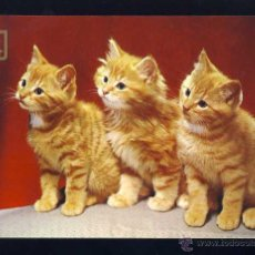 Postales: POSTAL DE ANIMALES: 3 GATITOS. GATO (ED.FISA 3065/4). Lote 52568566