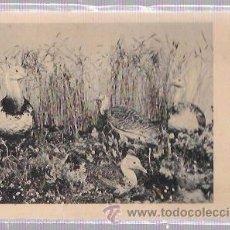 Postales: TARJETA POSTAL DE OCAS EN LA ORILLA DEL RIO.. Lote 52838043