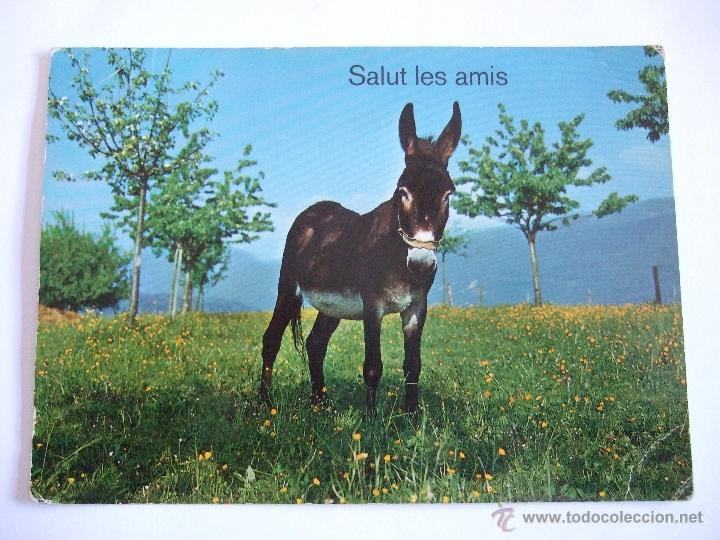 POSTAL BURRO - ASNO - CIRCULADA SIN SELLO (Postales - Postales Temáticas - Animales)