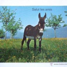 Postales: POSTAL BURRO - ASNO - CIRCULADA SIN SELLO. Lote 52920375