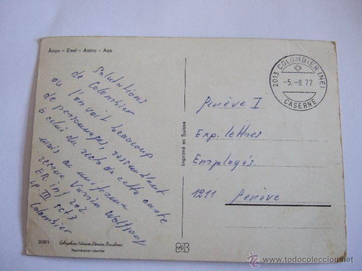 Postales: POSTAL BURRO - ASNO - CIRCULADA SIN SELLO - Foto 2 - 52920375