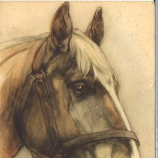 Postales: POSTAL CIRCULADA - 1961 - ANIMALES - CABALLO. Lote 54127376