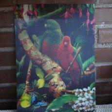 Postales: POSTAL O LAMINA EN 3D ESCENA PAPAGAYOS 34X24 CMS. Lote 54975818