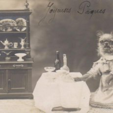 Postales: LA PERRITA AMA DE CASA, ESCRITA EN 1918. Lote 55103172