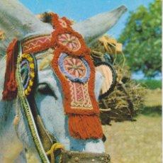 Postales: (1787) ESPAÑA TIPICA. BURRO. ASNO. Lote 55108581