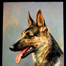 Postales: ANTIGUA POSTAL DE ANIMALES Nº102 ALSATIAN WOLHOUND. PERRO PASTOR ALEMAN. RIVST. AÑOS 30.SUIZA-SUISSE. Lote 55883498