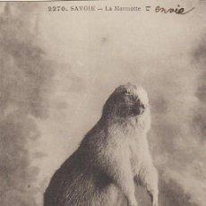 Postales: MARMOTA, POSTAL DE LOS AÑOS 20. Lote 56084252