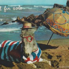 Postales: (9) ANIMALES COMICOS . BURRO. ASNO EN LA PLAYA. Lote 56151785