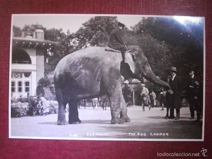 POSTAL - EUROPA - GRAN BRETAÑA - THE ZOO - LONDON - ELEFANTE - NUEVA - AÑOS 20 (Postales - Postales Temáticas - Animales)