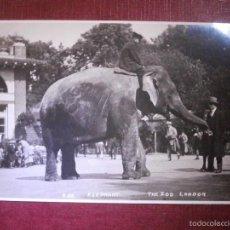 Postales: POSTAL - EUROPA - GRAN BRETAÑA - THE ZOO - LONDON - ELEFANTE - NUEVA - AÑOS 20. Lote 56655418