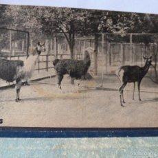 Postales: YAMAS-POSTAL ANTIGUA DE ZOOLOGICO BARCELONA. Lote 56719021