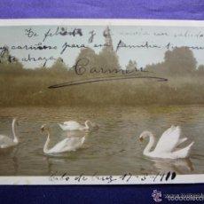 Postales: ANTIGUA POSTAL. CISNES. EN COLOR. CIRCULADA. 1910. Lote 57056601