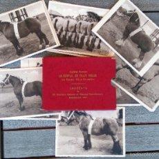 Postales: COLECCION 23 POSTALES,CABALLOS CAMPEONES DE CONCURSO OFICIAL EN BELGICA,AÑO 1947,POSTAL-CABALLO. Lote 57216731