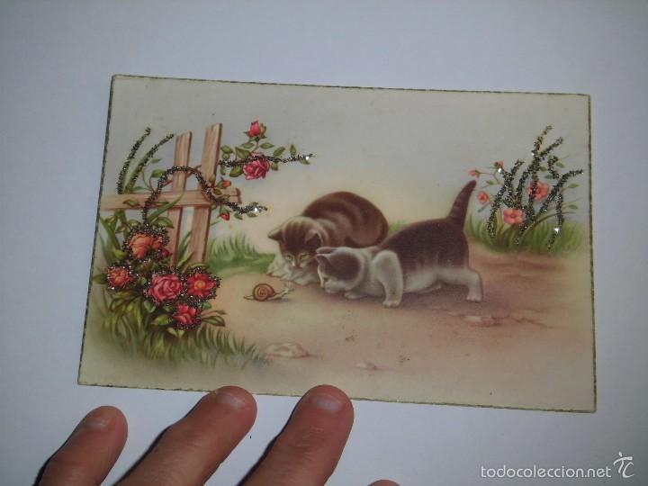 BONITA POSTAL GATITOS OBSERVANDO CARACOL EDICIONES C Y Z 563 (Postales - Postales Temáticas - Animales)