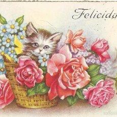 Postales: == PH988 - POSTAL - GATITO CON RAMO DE FLORES - FELICIDADES. Lote 58545944