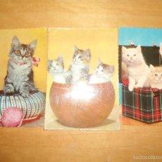Postales: LOTE POSTALES ANTIGUAS ANIMALES GATOS . Lote 58579752