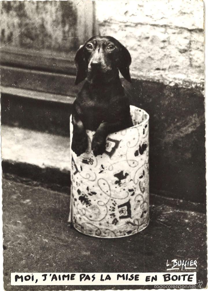 POSTAL FRANCESA. PERRO. CIRCULADA, 1963 (Postales - Postales Temáticas - Animales)