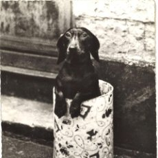 Postales: POSTAL FRANCESA. PERRO. CIRCULADA, 1963. Lote 60610391
