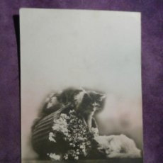 Postales: POSTAL - ANIMALES - GATOS - DOUNO Mº 105 EDITIONS PHOTOCHROM - DE PRINCIPIOS DE 1900 - ESCRITA. Lote 61259331