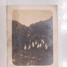 Postales: PINGÜINOS DE LA ISLA DE TIERRA DEL FUEGO - POSTAL FOTOGRAFICA - ARGENTINA . CHILE. Lote 62552664
