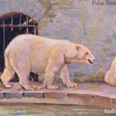 Postales: POSTALA ANTIGUA DE UN OSO POLAR. POLAR BEARS. FIRMADA POR OILETTE9152 STUDIES AT THE ZOO SER II. Lote 64093887