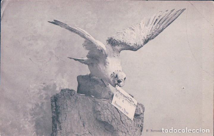 SOUVENIR DE ROYAN - OISEAU - PIGEON - E. NOVOZELSKI ROYAN. POSTAL AGUILA (Postales - Postales Temáticas - Animales)
