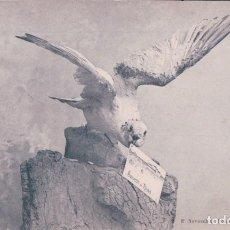 Postales: SOUVENIR DE ROYAN - OISEAU - PIGEON - E. NOVOZELSKI ROYAN. POSTAL AGUILA. Lote 64094295