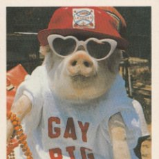 Postales: Nº 28378 POSTAL CERDO GAY PIG. Lote 67532601